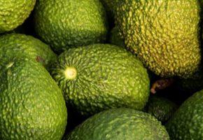 avocado frutto buonissimo