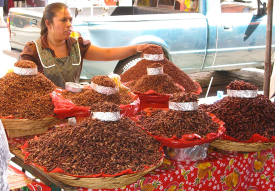 chapulinas in Oaxaca market